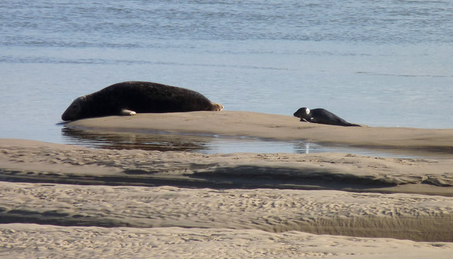 Solitary seal mother with pup