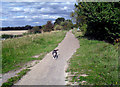 SU5288 : Old Dog on the Cycleway by Des Blenkinsopp