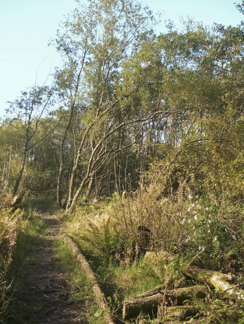 Footpath at Parc Slip Nature Park