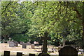 TQ0844 : St Mark's Church Graveyard, Peaslake by N Chadwick