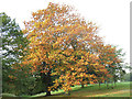 TQ3977 : Autumn leaves in Greenwich Park by Stephen Craven