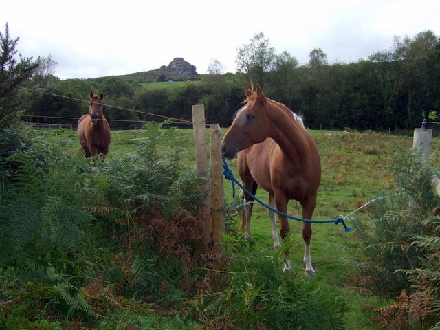 Horses with poll carn beyond ceridwen geograph for Negative show pool horse racing
