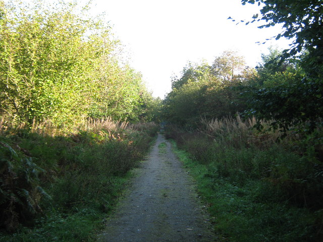 Track in Lyminge Forest