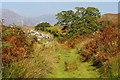SH6842 : Former Ffestiniog Railway Trackbed, Dduallt, Gwynedd by Peter Trimming