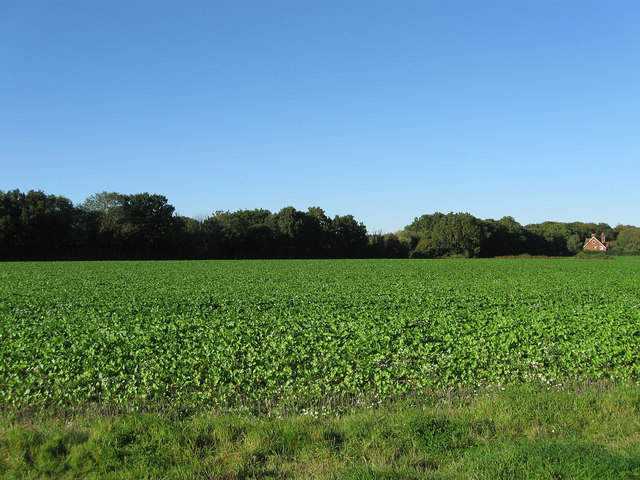 Old Furze Field