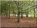 TQ1452 : Trees by  Admirals Walk, Polesden Lacey : Week 42
