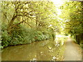 SE0543 : Canal in the trees by Andrew Abbott