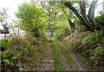 SH8615 : The old road from Aber Cywarch to Cwm Cerist by Richard Law
