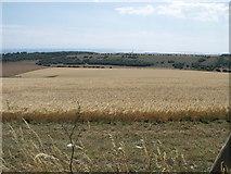 TQ2708 : Field of barley, Dyke Road near Brighton by nick macneill