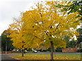 SU4513 : Sunningdale Gardens, Bitterne by Alex McGregor