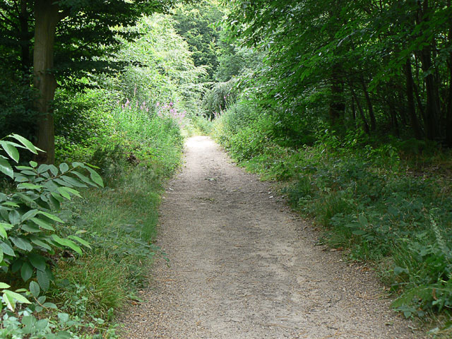 Carter's Ride, a Bridleway in Pound Wood
