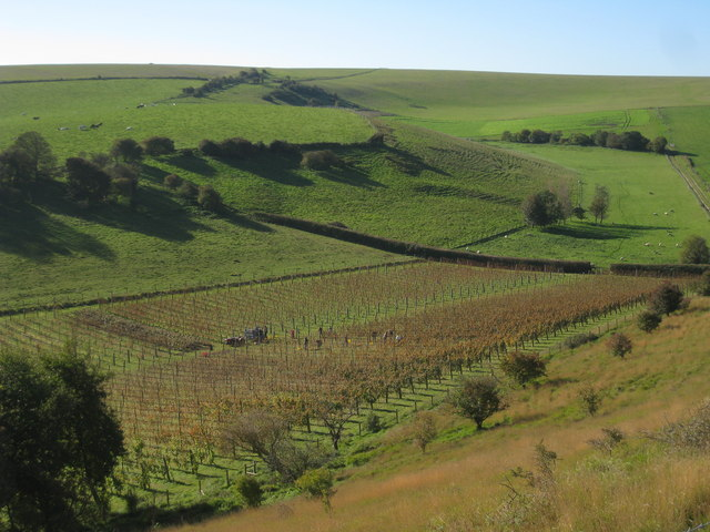 Breaky Bottom vineyard