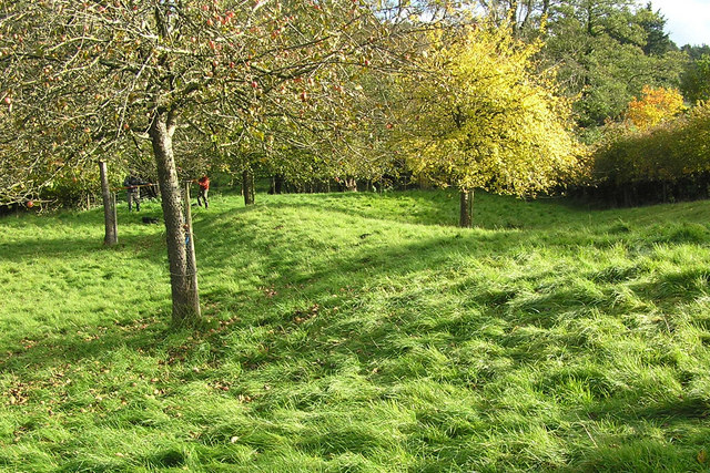 Wansdyke in a Somerset Orchard