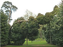 ST9770 : Horizontal tree at Bowood by Trevor Rickard