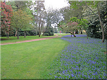 ST9770 : North side of the Arboretum at Bowood by Trevor Rickard