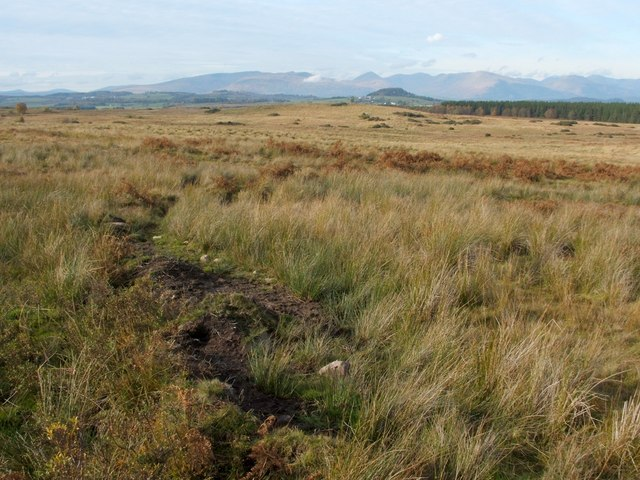 Old field boundary