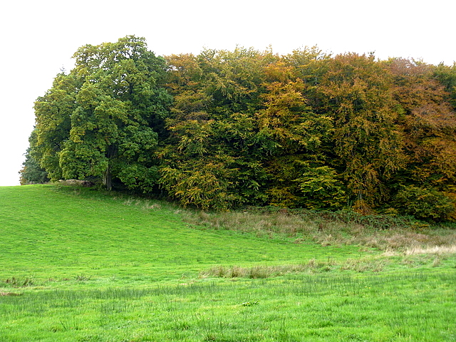 Fine trees on the Farnham estate