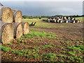 SU9609 : Bales, Stein Gate Field : Week 44