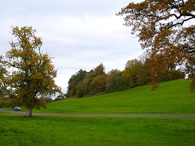 Trees along the new access road to the Farnham estate