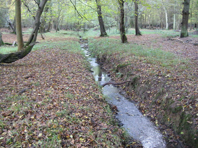 gsce epping forest coursework How is the deciduous forest used and sustainably managed recreation in epping forest millions of people visit epping forest every year with its woods, grassy plains.
