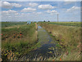TL4079 : Ditch by Bedingham's Drove by Hugh Venables