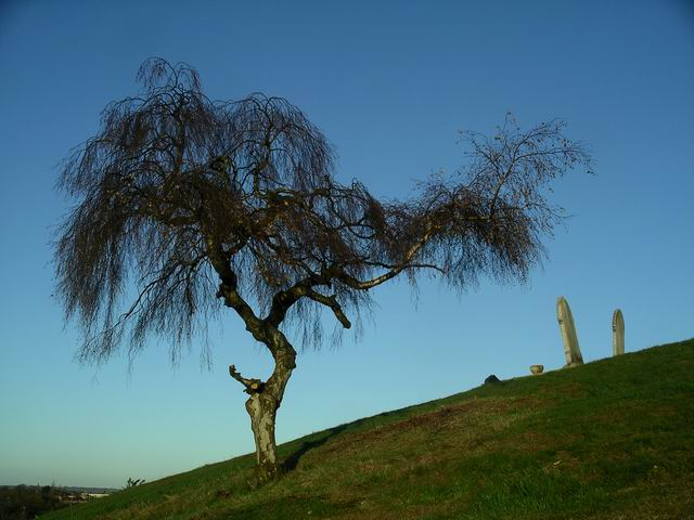 Tree, Kimberley cemetery