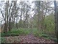 TR1536 : Footpath to Sandling Station by David Anstiss