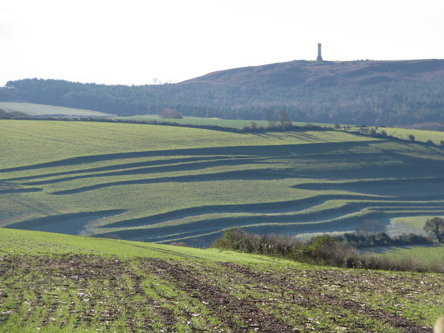 Strip lynchets near Winterbourne Steepleton