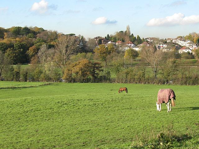 Horses near Spring Park