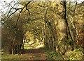 SU9586 : Path by Collinswood Road by Derek Harper