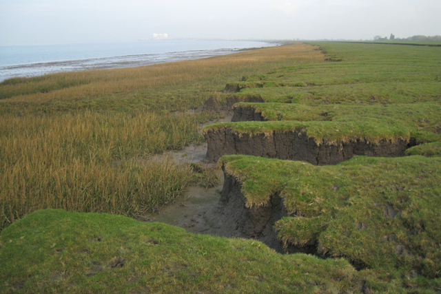 Lower step in saltmarsh, Littleton Warth