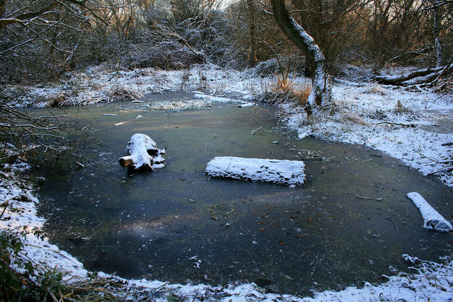 Frozen pond in fox covert c david lally geograph britain and