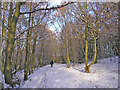 SE1936 : Ravenscliffe Woods in snow by John Illingworth