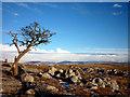 SD5480 : Hawthorn, Holmepark Fell by Karl and Ali