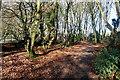 SU9088 : Through Roland Wood by Graham Horn