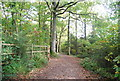 TQ6532 : Sussex Border Path in Bewl Wood by Nigel Chadwick