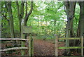 TQ6633 : Permissive path in Frogwell Woods by Nigel Chadwick