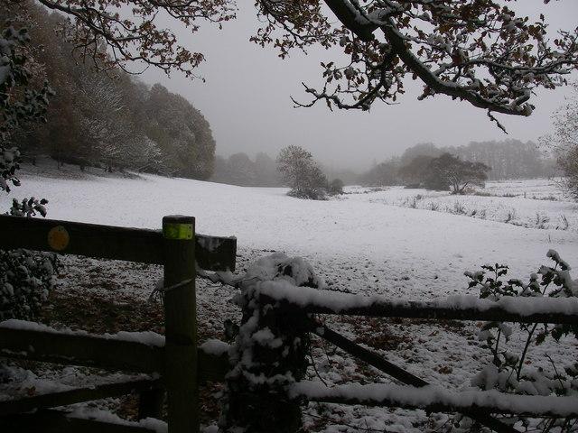 Meadows in winter