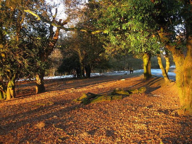 Early Morning Sun Ashdown Forest 169 Simon Carey Cc By Sa 2