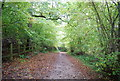 TQ6633 : Sussex Border Path, Bewl Water Woods by Nigel Chadwick
