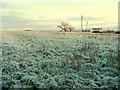 SO8430 : Frozen pasture : Week 49