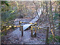 SW6343 : Boardwalk in Tehidy Woods by Rod Allday