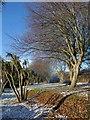 SX8966 : Roadside vegetation, Newton Road : Week 50