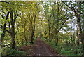 TQ5036 : Forest Way by N Chadwick