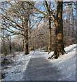 NS3982 : Path in Balloch Castle Country Park by Lairich Rig