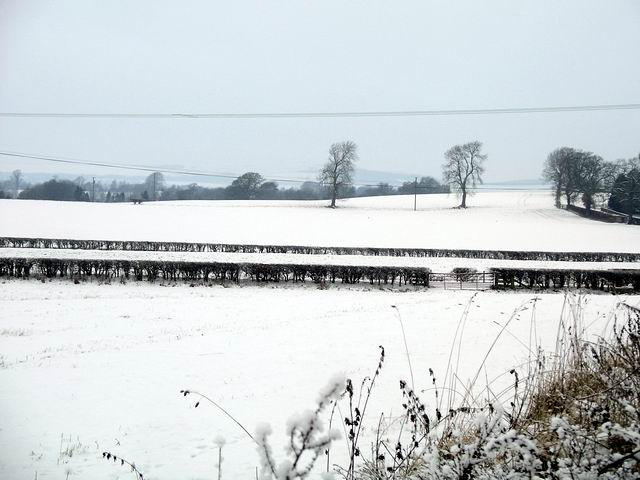 Snow covered fields, Halleaths
