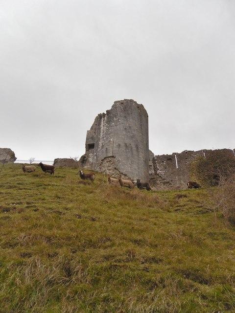 Shetland Sheep in Corfe Castle