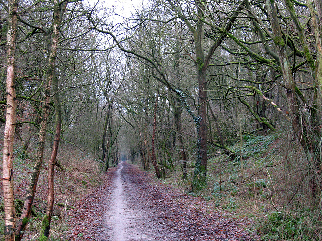 Cutting on the Biddulph Valley Way