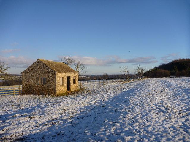 Field boundary runs to Waterloo plantation