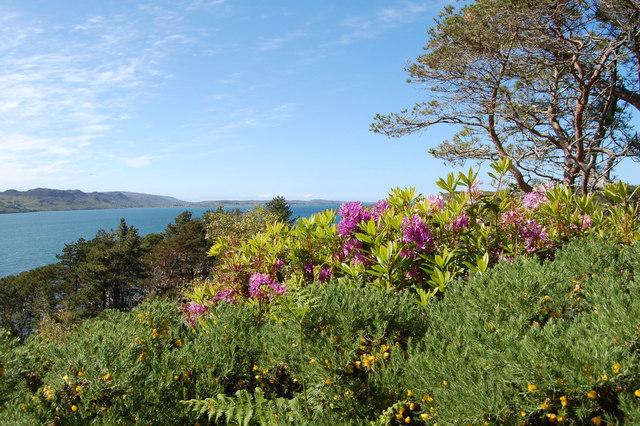 Gairloch : Looking down Loch Ewe from the woodland garden at Inverewe Garden